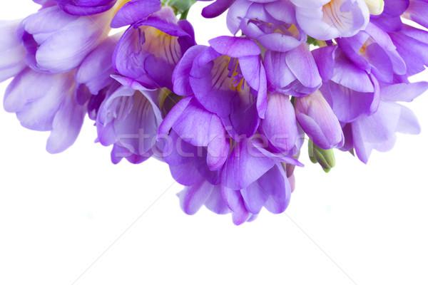 Azul flores frontera aislado blanco primavera Foto stock © neirfy