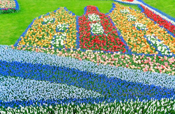 Fiori fiume tulipani crescita Foto d'archivio © neirfy