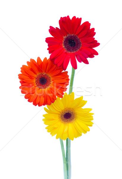 Stockfoto: Drie · bloemen · geïsoleerd · witte · schoonheid