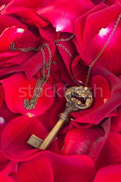 キー 赤いバラ 花弁 シンボル 愛 バラ ストックフォト © neirfy