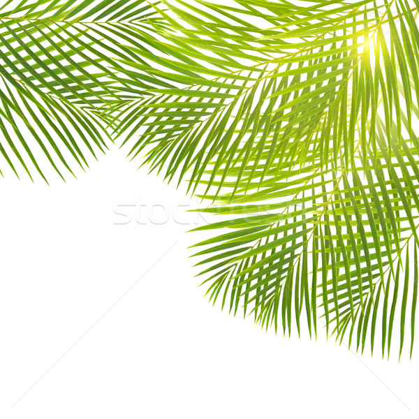 green palm leaves border Stock photo © neirfy