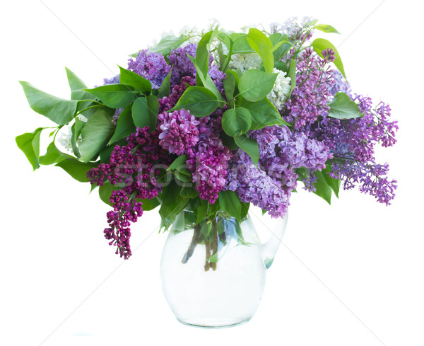Bunch of Lilac in jar Stock photo © neirfy
