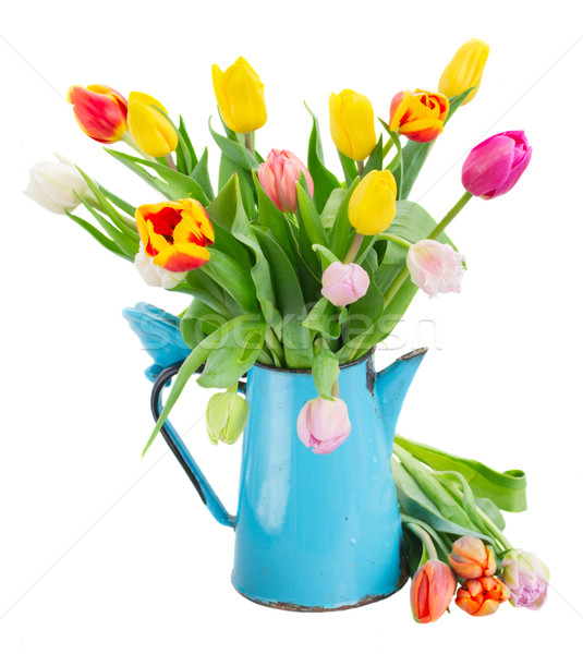 bouquet of multicolored   tulip flowers in blue pot  Stock photo © neirfy