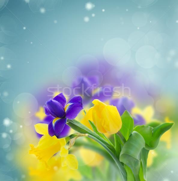весны Iris желтый нарциссов синий bokeh Сток-фото © neirfy