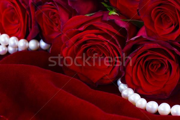 Rose Red velours tas fraîches fleurs soft Photo stock © neirfy