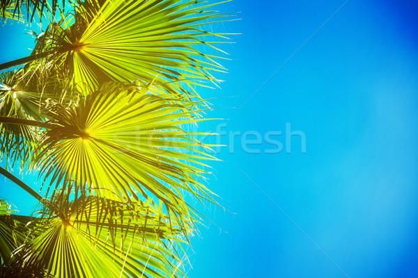 Palmeira azul folhas verdes brilhante blue sky retro Foto stock © neirfy