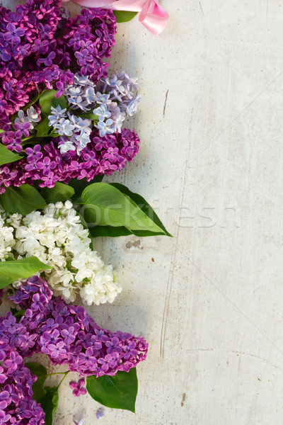 świeże liliowy granicy kwiaty pozostawia Zdjęcia stock © neirfy