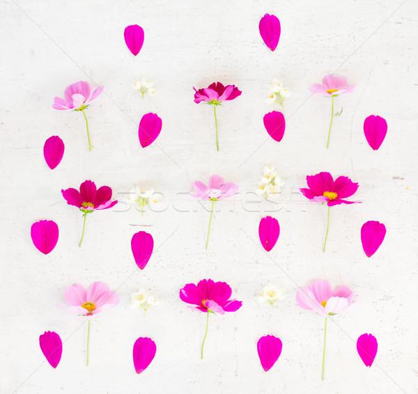 ピンク 花 花弁 白 表 ストックフォト © neirfy