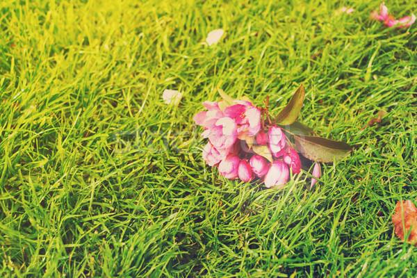 Elma ağacı çiçek yeşil yumuşak bahar çim Stok fotoğraf © neirfy