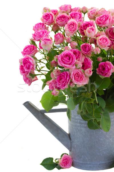 花束 ピンク バラ じょうろ 新鮮な ストックフォト © neirfy