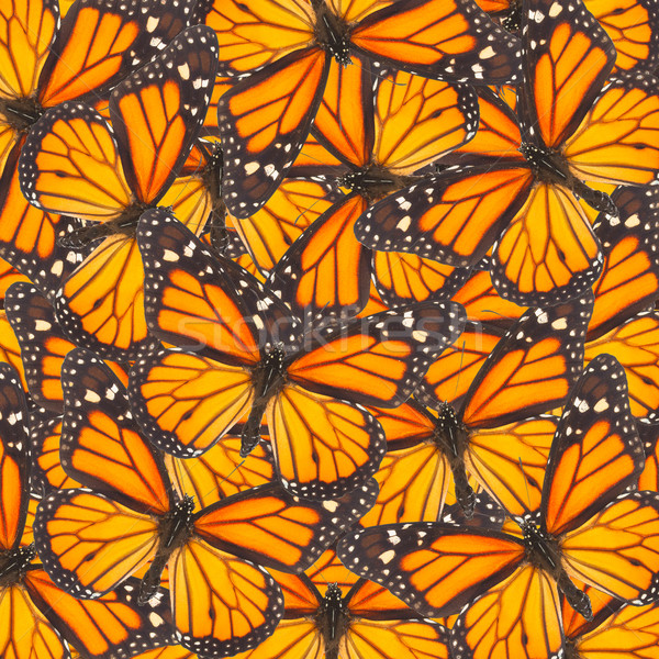 Orange monarch  butterfly Stock photo © neirfy