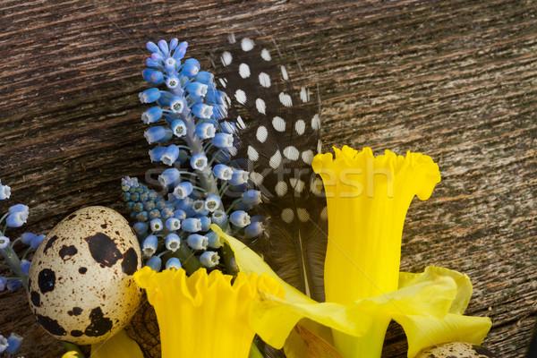 Narcisos ovos abrótea fresco flores Foto stock © neirfy