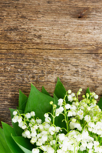 Lilly of valley on wood  Stock photo © neirfy