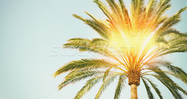 Pálmafa napsütés kék ég szalag nap természet Stock fotó © neirfy