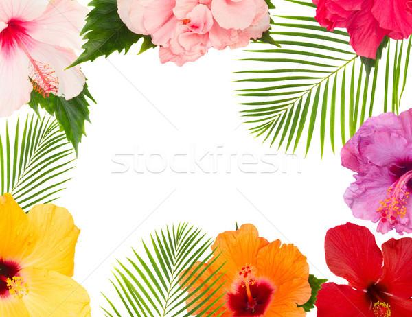Stockfoto: Oranje · hibiscus · bloem · tropische · bloemen · bladeren