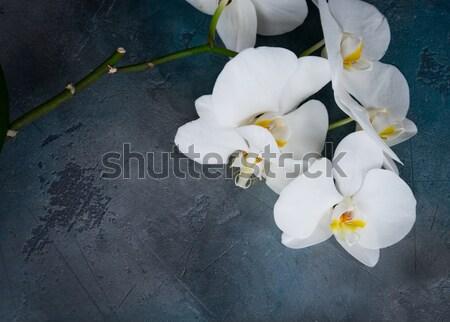 Foto stock: Fresco · orquídeas · flores · pedra · natureza