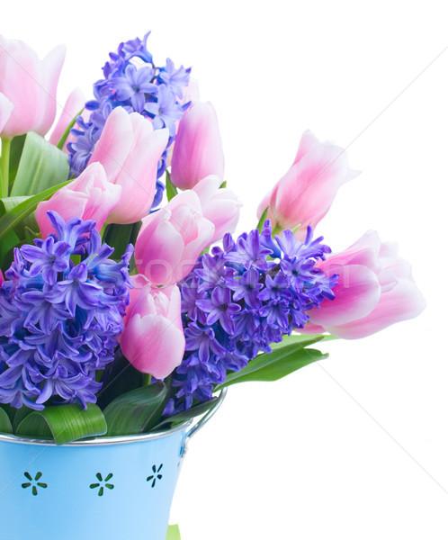 Tulipánok rózsaszín kék friss virágok zöld levelek Stock fotó © neirfy