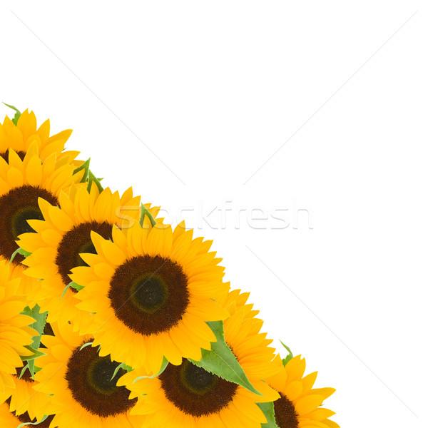 sunflowers border Stock photo © neirfy