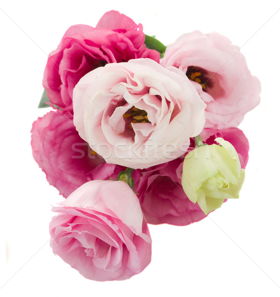 posy of  eustoma flowers from above Stock photo © neirfy