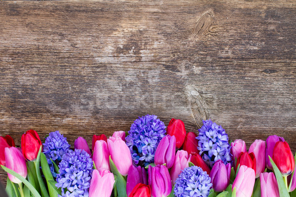 Stock photo: blue hyacinth and  tulips