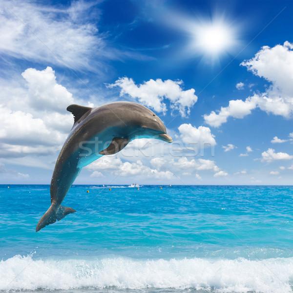 Saltar delfines soleado marina profundo océano Foto stock © neirfy