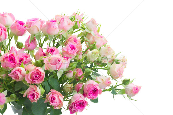 Bouquet of small pink roses Stock photo © neirfy