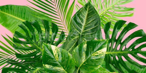 Tropikal yeşil yaprakları taze yaprakları çiçekler Stok fotoğraf © neirfy