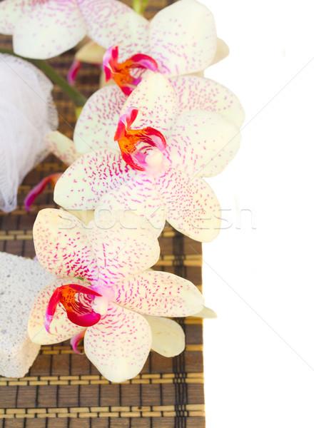 Spa Einstellungen rosa Blumen isoliert weiß Stock foto © neirfy