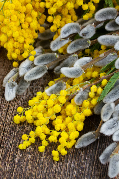 French mimosa with catkins Stock photo © neirfy