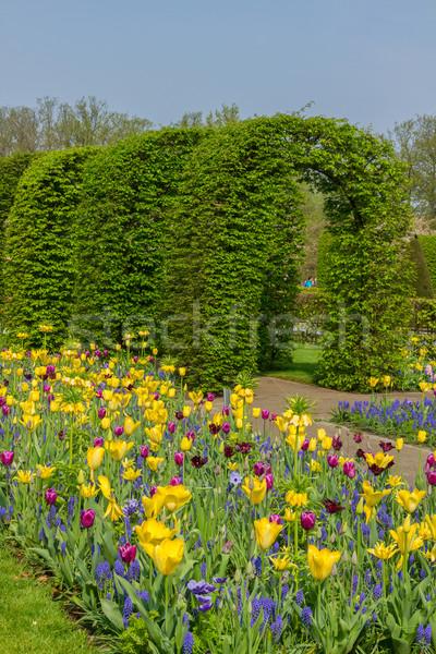 Keukenhof garden at sunny day , Netherlands Stock photo © neirfy