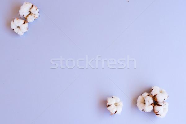 Cotton buds on blue Stock photo © neirfy