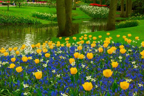 Primavera giardino colorato fiume erba tulipani Foto d'archivio © neirfy