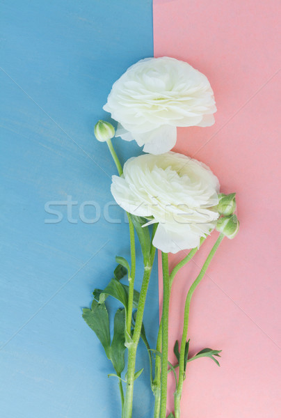 Fehér virágok rózsaszín kék felső kilátás Stock fotó © neirfy