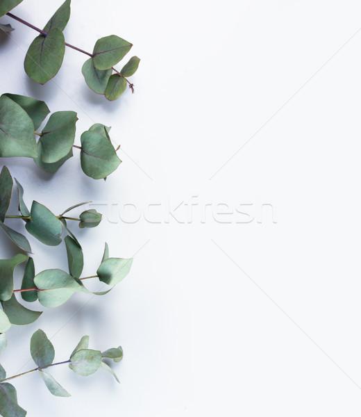 Yeşil çerçeve gümüş dolar sınır Stok fotoğraf © neirfy