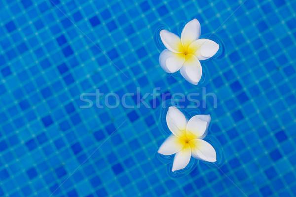 Due fiori blu acqua natura Foto d'archivio © neirfy