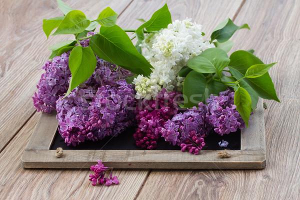 сирень цветы таблице свежие белый Purple Сток-фото © neirfy