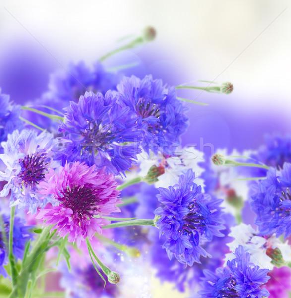мак василек лет области Blue Sky bokeh Сток-фото © neirfy