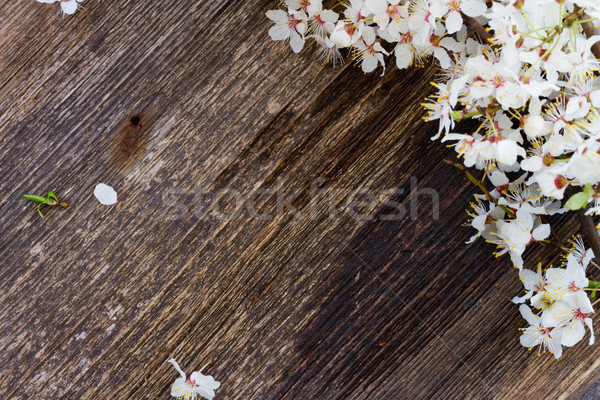 twigs with blooming  flowers Stock photo © neirfy