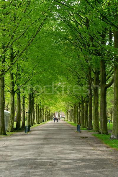 Park Niederlande Gasse Blume Natur Landschaft Stock foto © neirfy