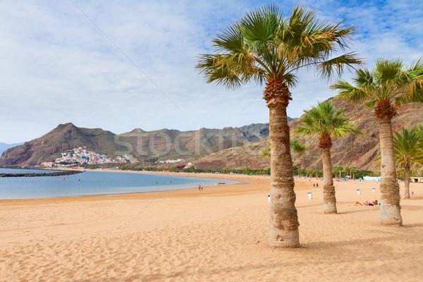 Praia tenerife Espanha ver palms ensolarado Foto stock © neirfy