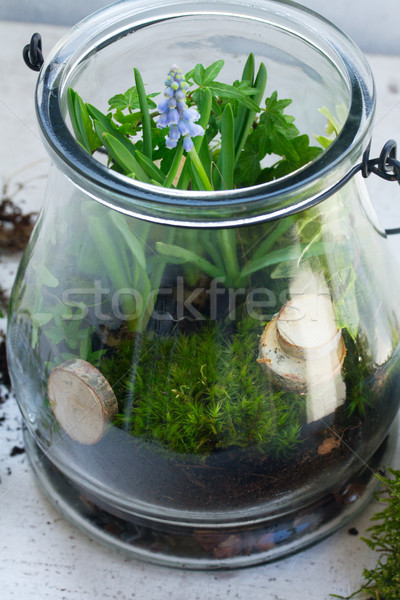 Tuin binnenkant metselaar jar planten Stockfoto © neirfy