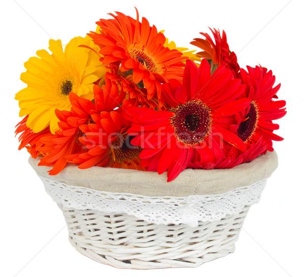 gerbera flowers in basket Stock photo © neirfy