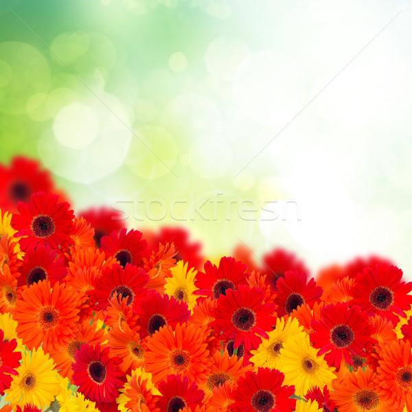 Virágok váza izolált fehér szépség százszorszép Stock fotó © neirfy