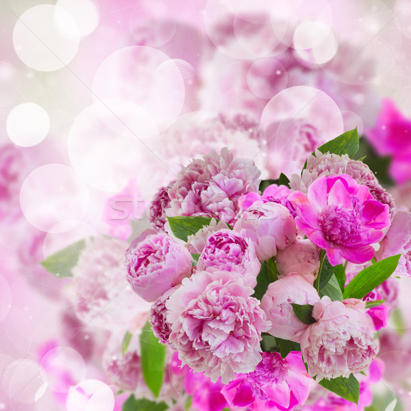 garden of pink peonies Stock photo © neirfy