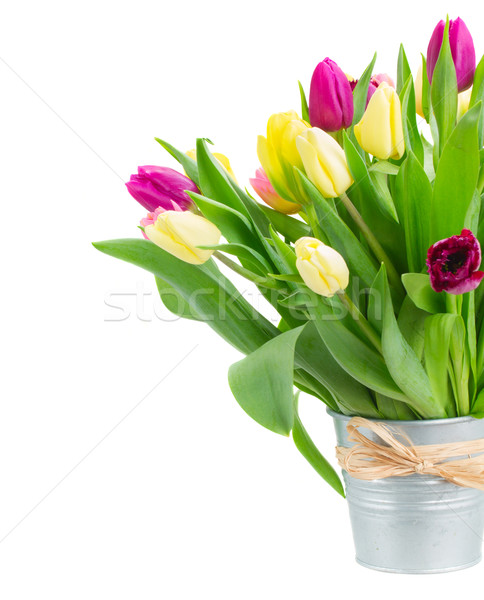 bouquet of  yellow and purple  tulip flowers Stock photo © neirfy