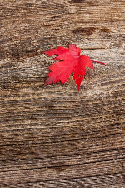 Rouge feuille d'érable bois résumé nature Photo stock © neirfy
