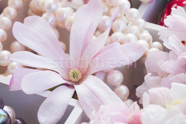 Drzewo kwiaty pereł koronki magnolia vintage Zdjęcia stock © neirfy