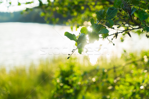 Nyár tájkép napsütés fa tó erdő Stock fotó © neirfy