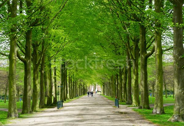 Park Niederlande Frühling Gasse Blume Natur Stock foto © neirfy