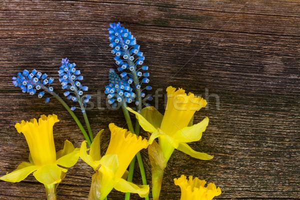 水仙 卵 スイセン 青 黄色の花 ストックフォト © neirfy